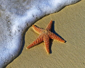 BEACH STARFISH OCEAN Computer Mouse Pad  7 x 9   or Hot Pad Fabric Top Rubber Backed