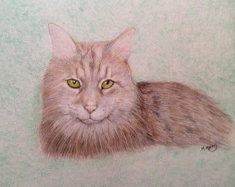 Va attirer votre animal de compagnie au crayon de couleur