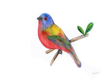 PRINT of original artwork giclee bird colorful bright small bird