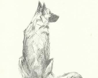Original Sketch of a German Shepherd. Graphite.