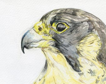 falcon watercolour A5 print