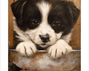 Border Collie Puppy Dog Portrait by award winning artist JOHN SILVER. Personally signed A4 or A3 size Print. BC008SP