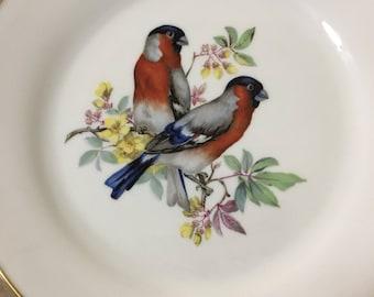 1930's Rosenthal Fine Porcelain Plate Birds w\ Gold Trim