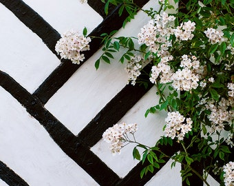 French Country Photograph, Cottage Wall, Romantic Home Decor, France Travel Photograph, Large Wall Art