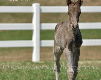 Foal Picture, Inspirational Quotes, Horses, Foals, Photography, Horse Photos, Rocky Mountain
