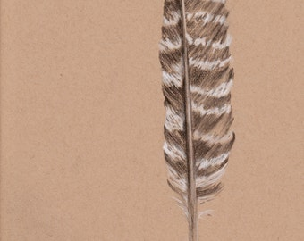 Turkey Feather Drawing, Original Charcoal Drawing, Wild Turkey Feather, Original Drawing