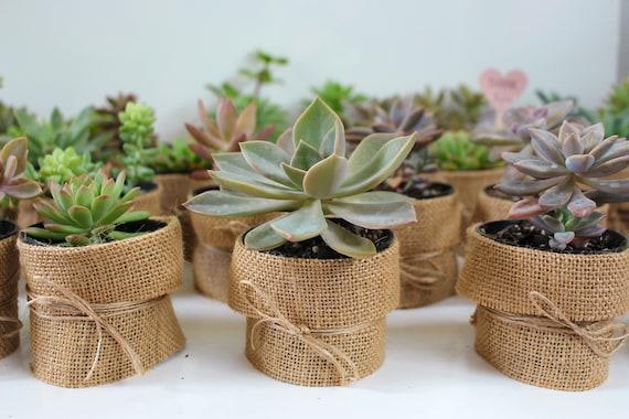 Wedding Favour Hessian Succulents