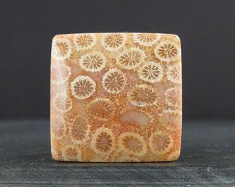 Designer cabochon ,  fossil cabochon, semiprecious stone, Jewelry making supplies B6163