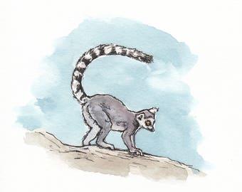 6x6 Original Lemur Watercolor
