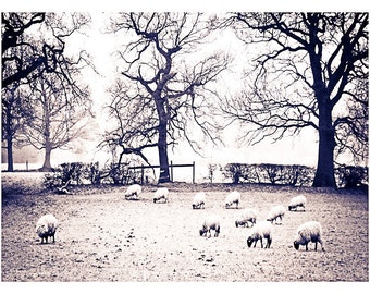 A Duotone image of Sheep and Trees on a Frozen kerridge field in east Cheshire