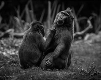 Landscape, Photography, Wildlife, Zoo, Dublin Zoo, Black and White, Fine Art, Photo, Print, 5x7, 8x12, 12x18