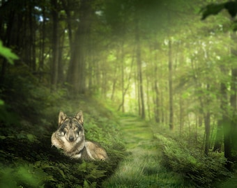 Wolf in the Forest, premade Backdrop, Wolf,  Forest Background, Fantasy Backdrop, Fairy Tale, Wolf Backdrop, photo edit, Animal Backdrop