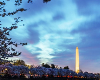 Washington DC print of the Washington Monument and DC skyline at dawn during the Cherry Blossom Festival at sunrise on the National Mall