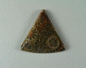 Fossilized Coral Custom Cabjochon
