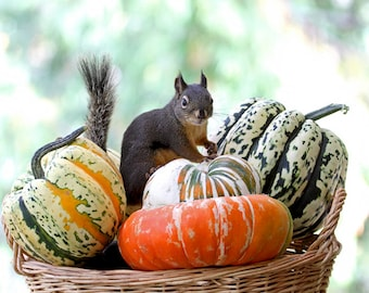Autumn Squirrel Art, Fall Decor, Woodland Animals, Funny Photographs, Animal Prints, Autumn Harvest, Pumpkins