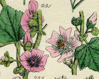 Antique Botanical Print of Wild Flowers, 1914 John Sowerby Flax, Mallow, Lime, Hand-Coloured Flower Plate (221 to 240)