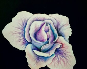 Blue&Purple Rose Drawing