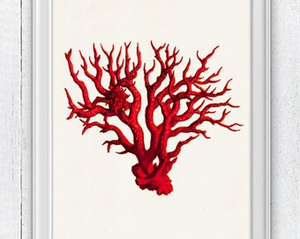 The great Red coral - Antique Illustration  , sea life print- Marine  sea life illustration A4 print SWC071