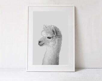 Alpaca Poster-Nursery Animal Print-DIGITAL DOWNLOAD-Alpaca Printable Wall Art-Kids Room Decor-Kids Print-Nursery Print-Nursery Poster Print