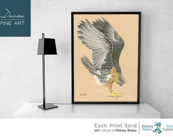 Peregrine Falcon - Peregrine Falcon Pastel Drawing, Peregrine Falcon Pastel Print, Peregrine Falcon Wall Art, Peregrine Falcon Giclee Print
