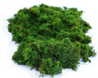 1 lb Bulk Preserved Loose Forest Moss in Spring Green.