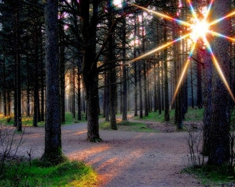 Sun rays in the forest, surreal nature photo art, HDR, fine art photography 8x10
