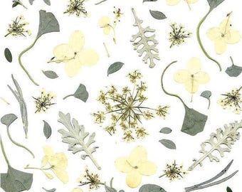 Winter wonderland - Botanical art print created from pressed flowers and leaves - Winter holiday greeting stationery - Hydrangea