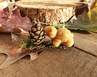 Candle in pure beeswax-turtle