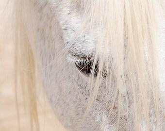White horse photo, horse photography, black and white horse photo, equine art, nursery decor, horse art