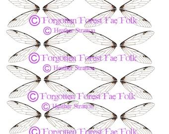 Clear fairy wings