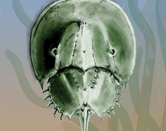 Horseshoe Crabs (comic book)