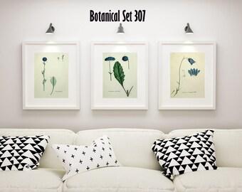 Blue Floral Botanical Wall Art, Set of 3 Botanical Prints, Modern Farmhouse Decor, Framed Wall Art, Housewarming Gift, Bedroom Decor