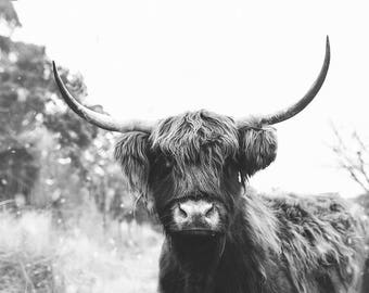 Edna the Highland Cow Print, Scottish Cow, Black and White Print, Cow Art, Cow Photography, Yak Print, Instant Download, Digital Download