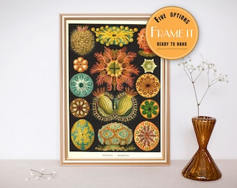 """Vintage illustration from Ernst Haeckel  - framed fine art print, sea creatures,sea life, 8""""x10"""" ; 11""""x14"""", FREE SHIPPING - 299"""