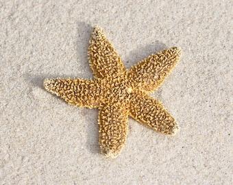 Beach Photography, Wall Art Coastal, Starfish Print, Large Seashore Art, Gold Coastal Decor, Beach House Art, Starfish on the Beach Picture