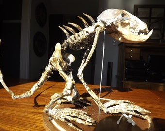 Chupacabra Skeleton in Glass Dome Cryptozoology Prop Horror