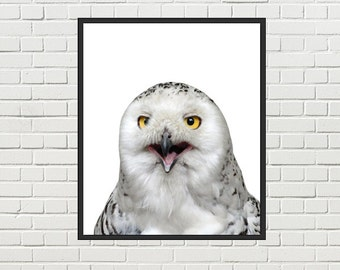 Snowy owl printable photo, snowy owl wall art, snowy owl print, white owl printable - office wall art, home wall decor - instant download
