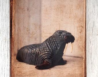Vintage Toy Walrus  Art/Photo - Wall Art 4x6