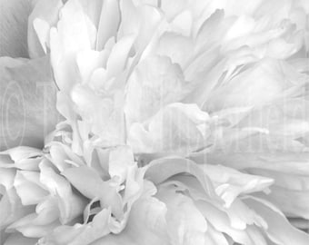 Black and White Photo, Pretty Peony, Fine Art Photography, Floral, Flower, Macro Abstract Wall Art, Gentle Dreamy Home decor,8x8,16x16,12x12