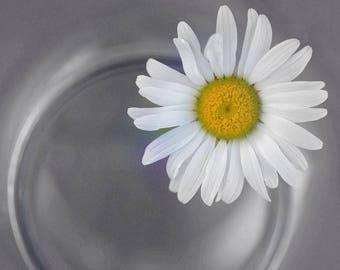 Daisy in a Mason Jar Photography 5x7 8x10 Print 11x14 Standout