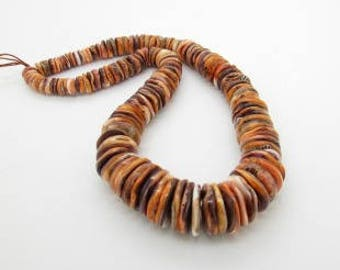 Lions Paw Shell Disc Beads, Large Graduated Strand, Natural Shell Beads, Orange Shell Bead, 9-17mm (1)