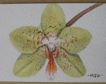 Green Phaleanopsis - ACEO original watercolour painting
