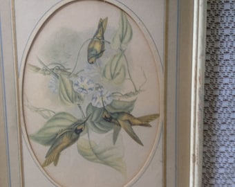 Vintage Framed John Gould Hummingbird Print-Mid 1800's- Small Size-Ivory Frame Oval Mat