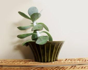 vintage planter 1960s olive green mccoy ceramic plant houseplant