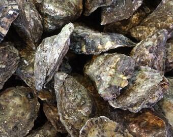 Oyster Art / Oyster Print - Seafood Wall Art - Decor - Wellfleet - Cape Cod - Restaurant Art - Food Art / Food Gift - Nature Photography
