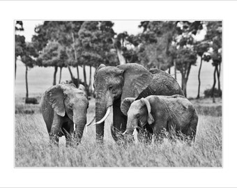 Elephant photograph - elephant fine art print - 14 x 11 inch Mounted elephant print - elephants - nature photography - masai mara