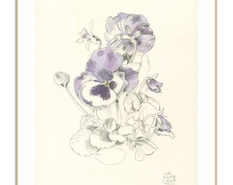Pansy drawing - botanical PRINT of Violas Flowers - watercolor and pencil drawing - Viola tricolor blossom botanical art by Catalina