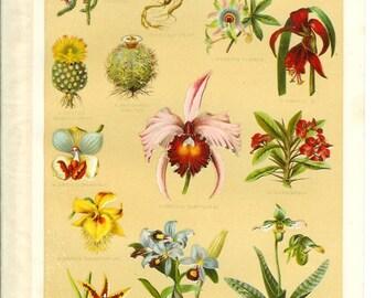 1905 Flower Print