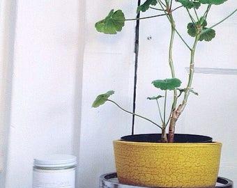 Cinnamon Cedar - Eco-friendly Vegan Soy Candle - 100% Pure Essential Oils - clean burning - aromatherapy