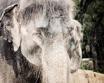 Elephant Photo - 8x10 photograph - Elephant Close Up - fine art print -  elephant in the rain - nursery art - holiday gift